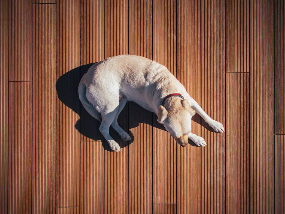 Dog, Floor, Pet, Animal, Boards, Wooden, Cute, Canine