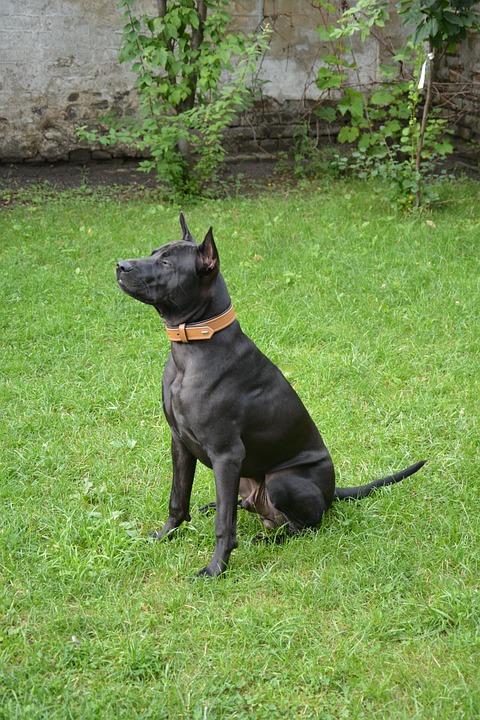 Dog, Enjoy The Sun, Enjoy, Garden, Dog And Garden, Pet