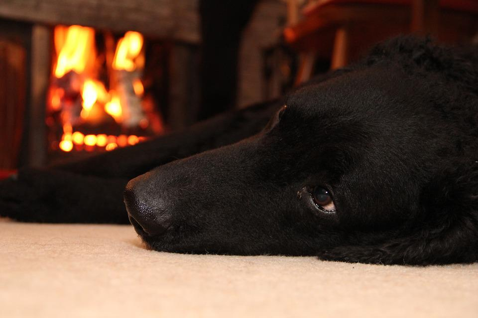 Dog, Fire, Pet, Animal, Flame, Fireplace, Warm, Indoor