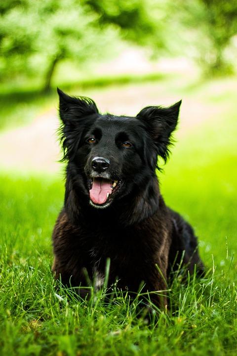 Dog, Black, Black Dog, Pet, Hundeportrait
