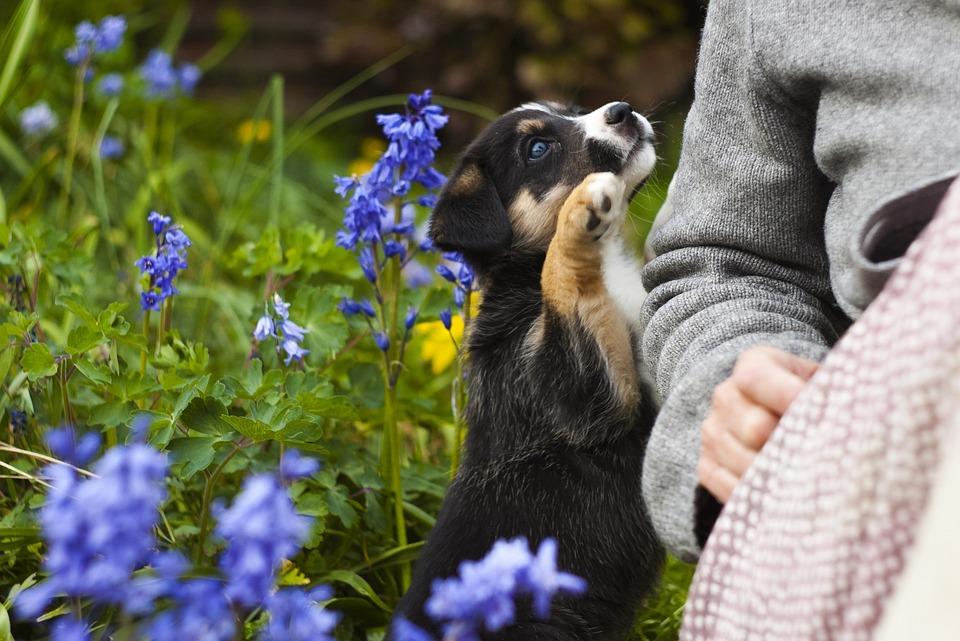 Puppy, Dog, Cute, Canine, Pet, Garden, Doggy, Flowers