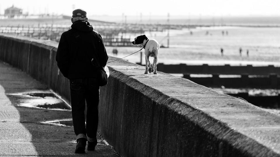 Walk, Dog, Seaside, Hunstanton, Dog Walking, Pet