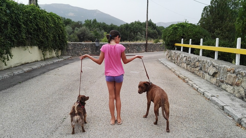 Dogs, Animals, Pet, Friend