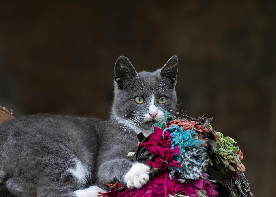 Cat, Domestic, Farm, Animals, Pet, Portrait, Feline
