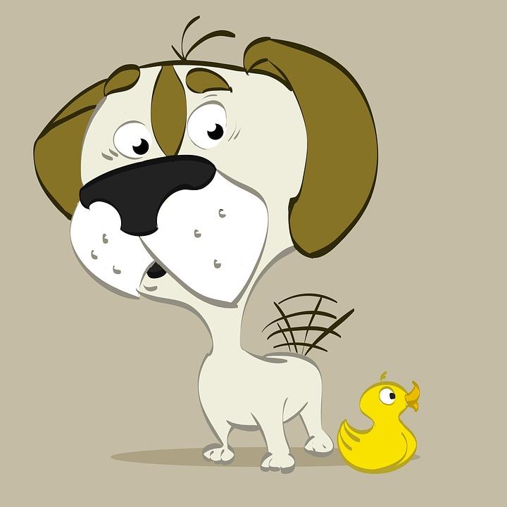 Dog, Duck, Animals, Happy, Cuteness, Bug, Pet, Canine
