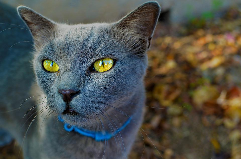 Cute, Animal, Nature, Portrait, Eye, Cat, Looking, Pet