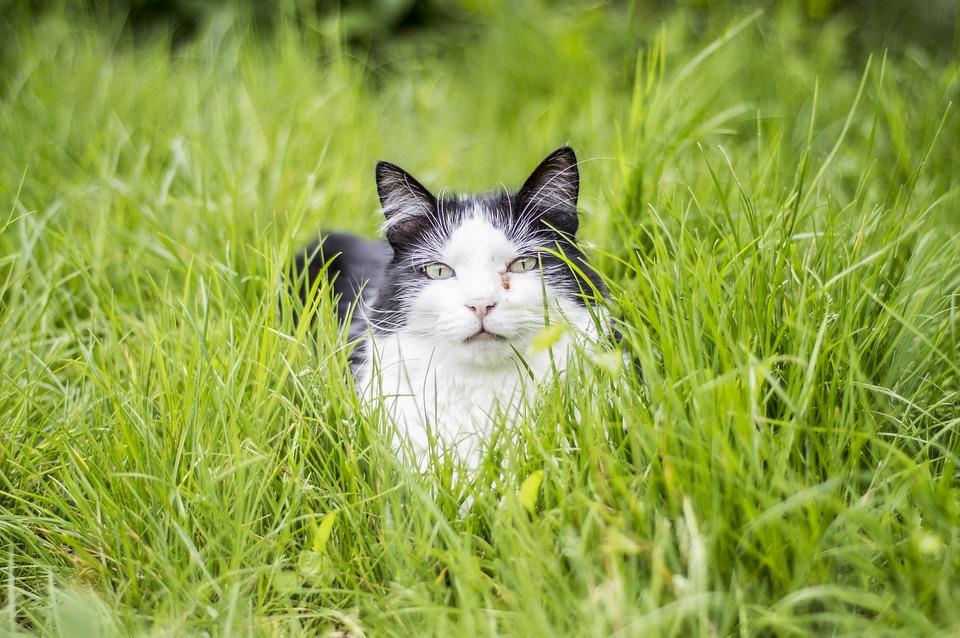 Kitty, Cat, Animal, Kitten, Pet, Cute, Feline, Domestic