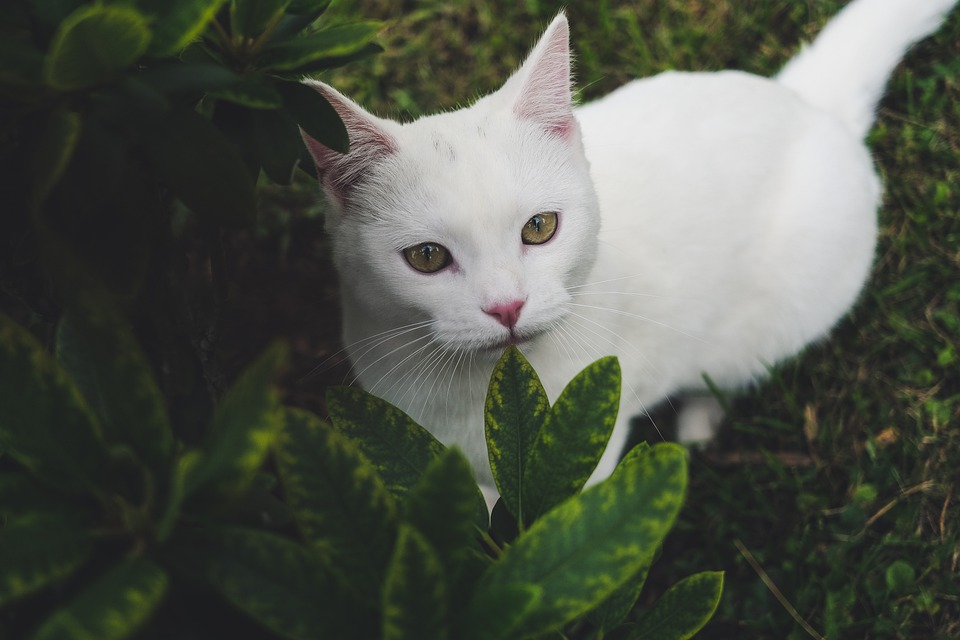 Cat, Kitty, Garden, Green, Pet, Feline, Animal, Cute