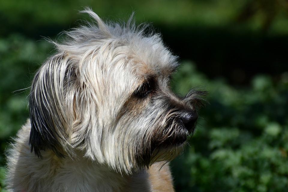 Dog, Pet, Head, Animal, Puppy, Domestic Dog, Canine
