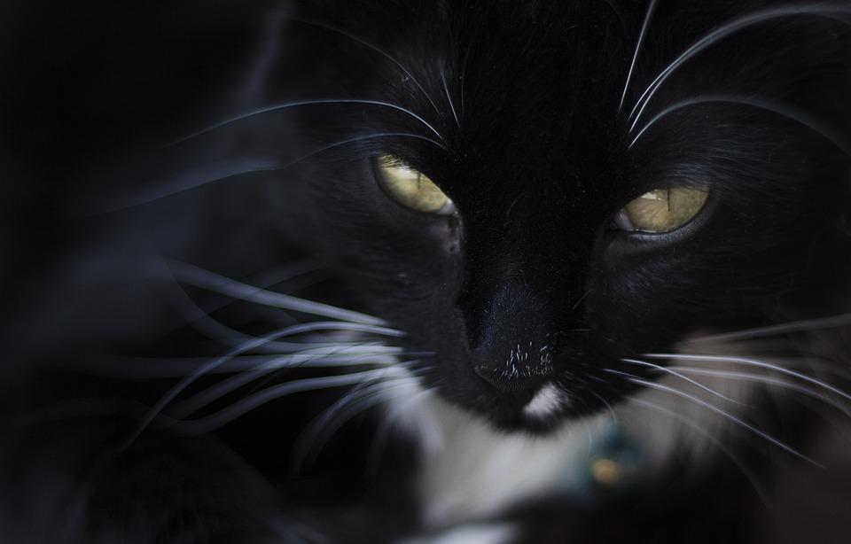 Cat, Pet, Cute, Animal, Domestic, Kitten, Funny, White