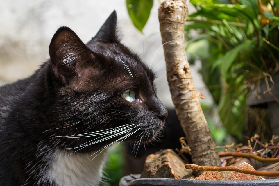 Cat, Black Cat, Pet, Animal, Kitty, Black, Filhote