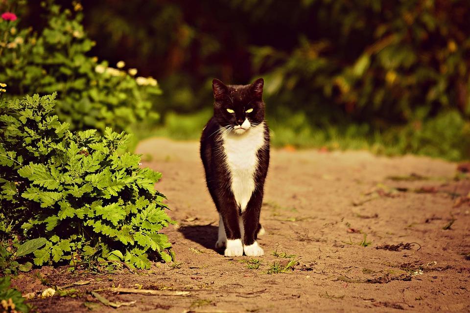 Black Cat, Animal, Mammal, Pet, Domestic, Feline