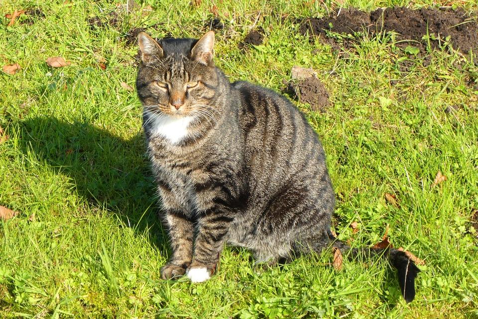 Cats, Coat, Watch, Eyes, Mammal, Face, Cat, Pet, Hairy