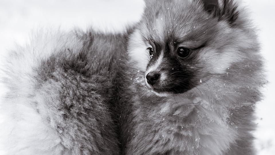 Dog, Canine, Mammal, Animal, Cute, Pet, Portrait