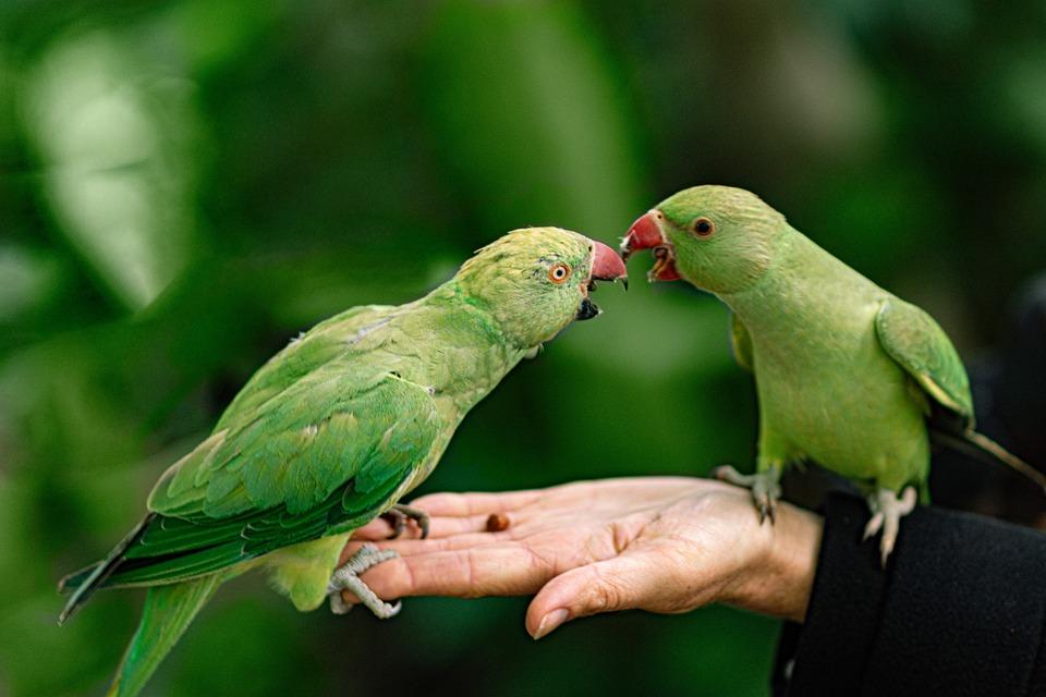 Parrots, Hand, Park, Feeding, Bird, Pet, Wild, Green
