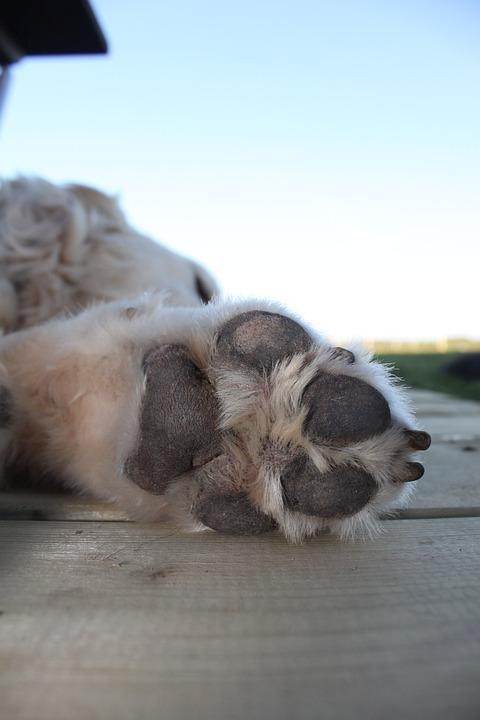 Dog, Canine, Pet, Paw, Dog Paw, Paw Pads