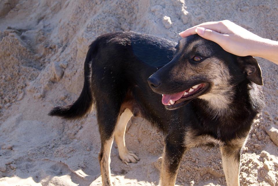 Dog, Animal, Iron, Pets, Animals, Pet, Devotion