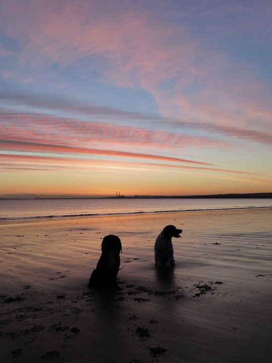 Sunrise, Dogs, Sky, Pet, Beach, Sea, Silhouette