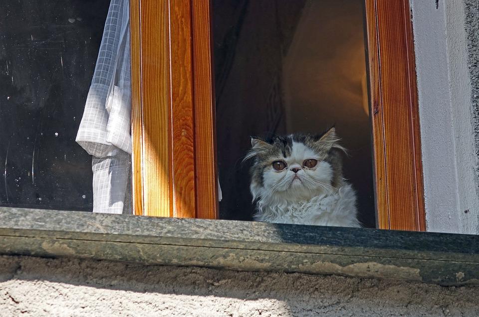 Cat, Window, Pet, Tamed, Feline, Curious, House