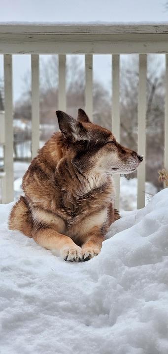 Dog, Winter, Snow, Pet, Animal, Domestic, Canine, Cute