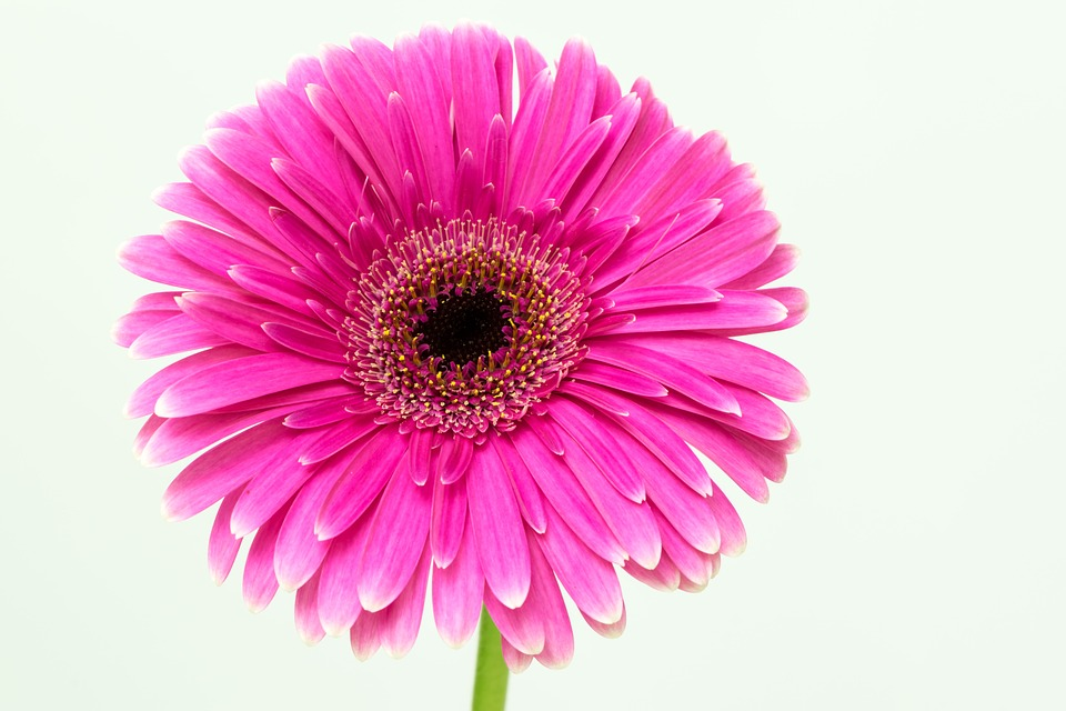 Flower, Flora, Nature, Petal, Color, Beautiful, Desktop