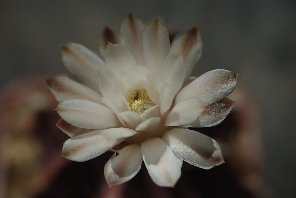 Flower, Plant, Nature, Beautiful, Petal, Blooming