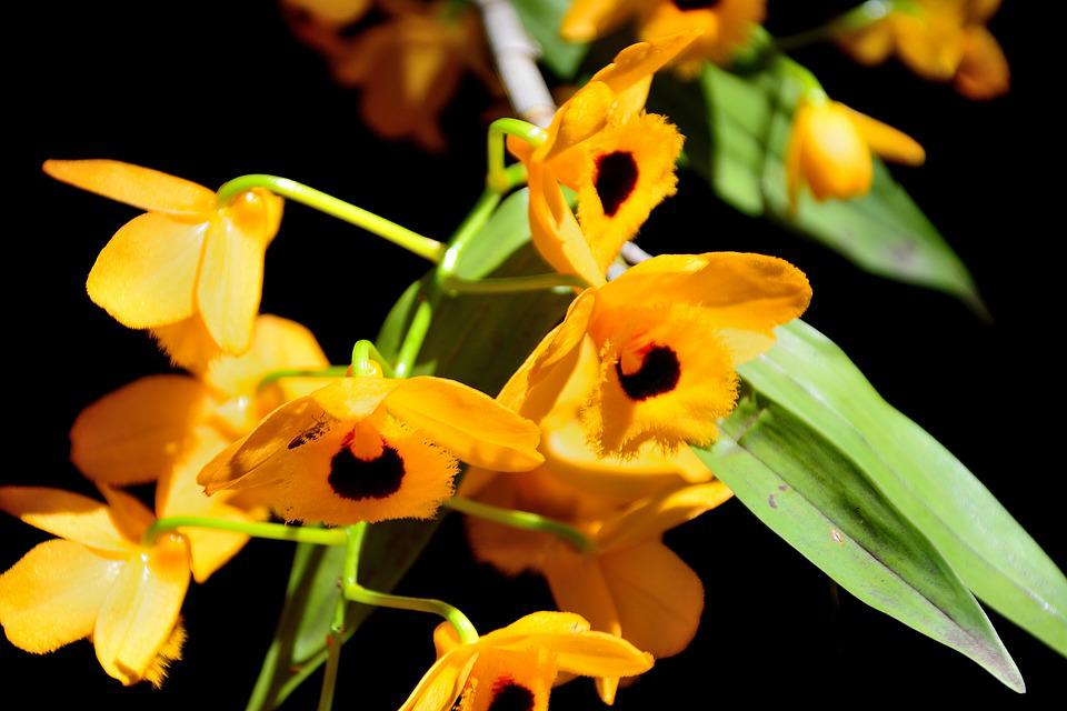 Wind Am, Beauty, Yellow, Flowers, Color, Petal, Summer