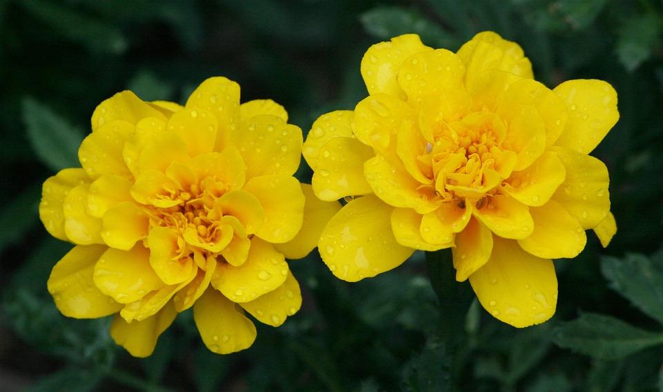 Floral, Plant, Natural, Blossom, Bloom, Petal