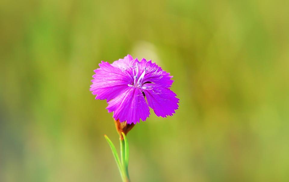 Flower, Plant, Petal, Posts, Nature, Floral, Bright