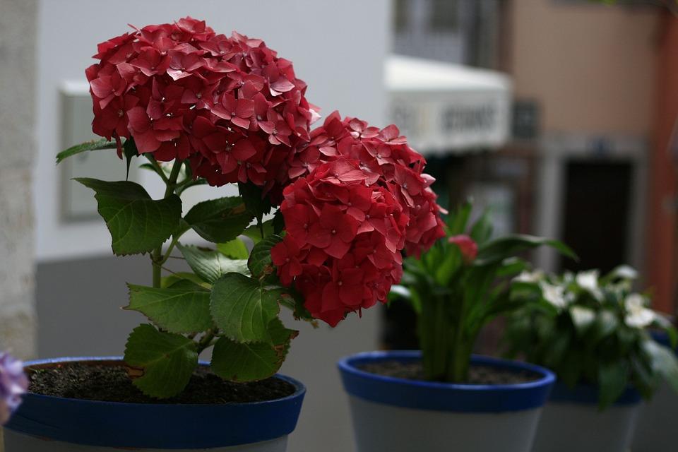 Flower, Red, Floral, Plant, Blossom, Petal, Bloom