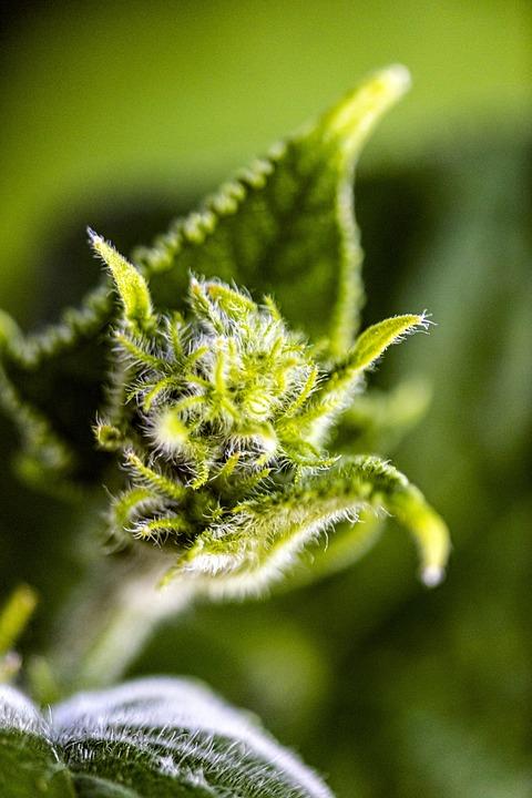 Flower, Bud, Petal, Garden, Outdoors, Fresh, Pollen