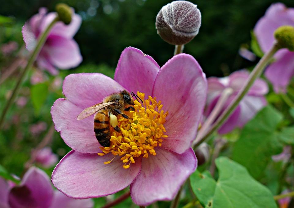 Flower, Pink Flower, Bee, Blossom, Bee In Flower, Petal