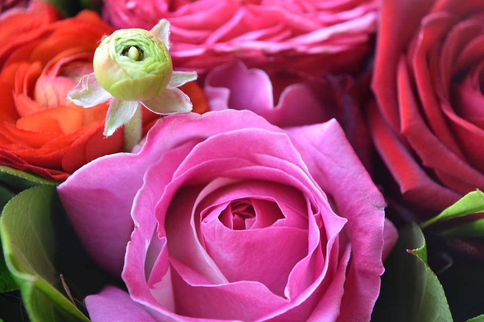 Rosebush, Flower, Petal, Bouquet Of Flowers, Plant