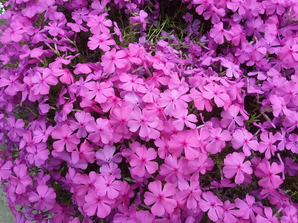 Flower, Plant, Garden, Petal