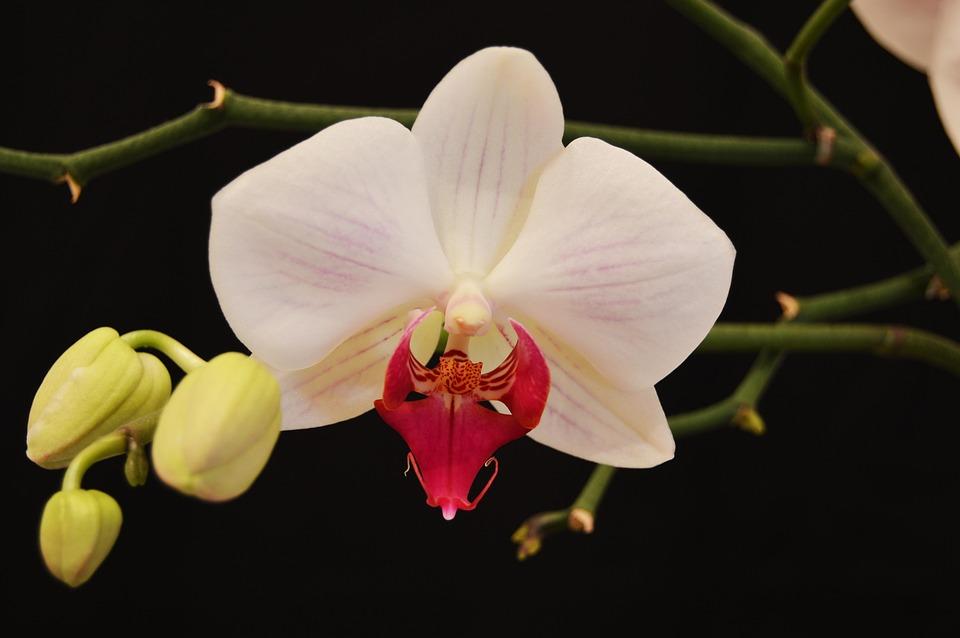 Spring, Flower, Petal