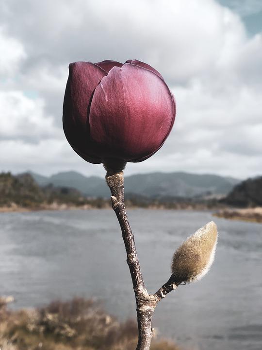 Petal, Bud, Plant, Flower, Orchid, Blossom, Spring