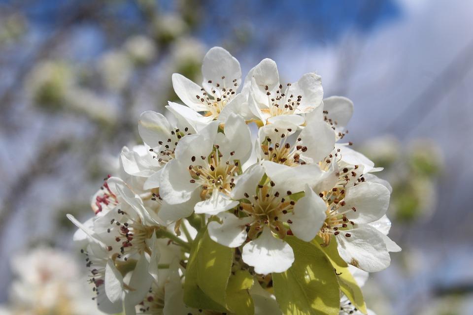 Nature, Flower, Plant, Garden, Flowering, Petal