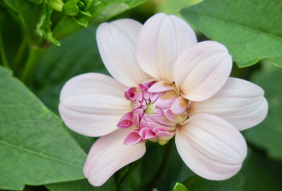Nature, Flower, Plant, Garden, Leaf, Bloom, Petal