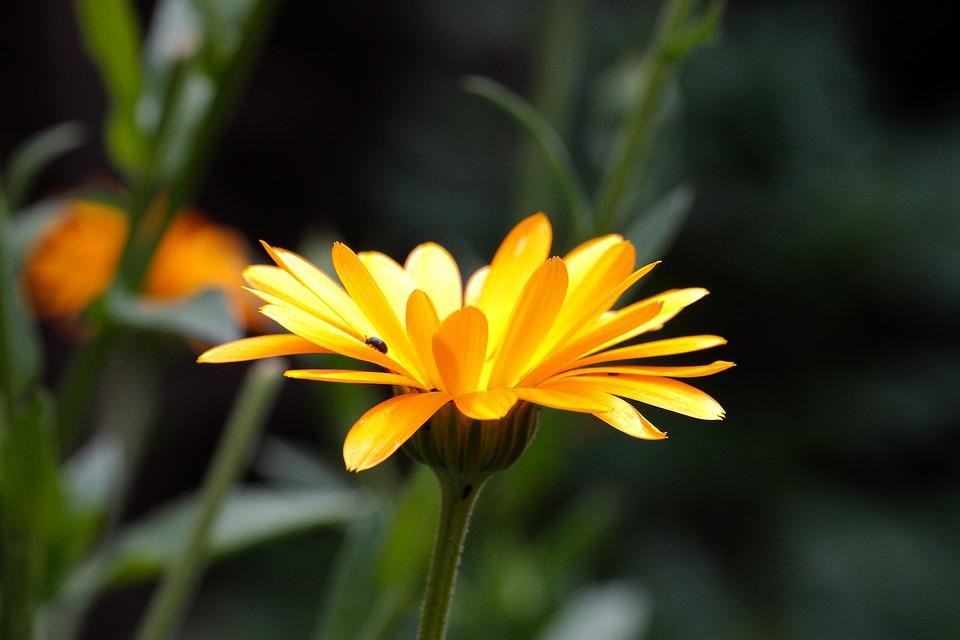 Nature, Flower, Plant, Summer, Garden, Leaf, Petal