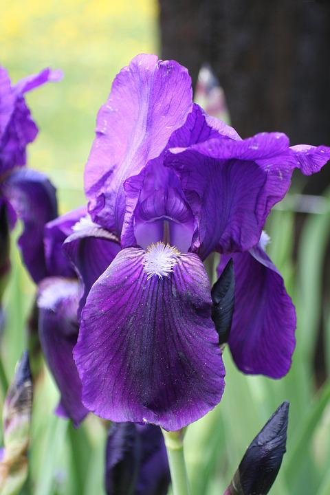 Purple Flowers, Floral, Garden, Spring, Blossom, Petal