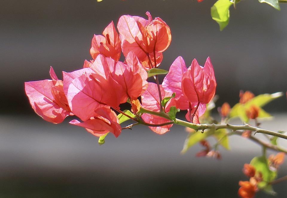Nature, Plant, Flower, Leaf, Garden, Light, Petal