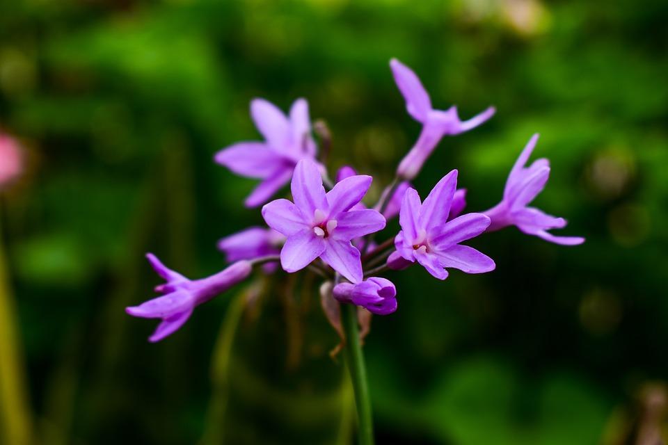 Nature, Flower, Plant, Petal