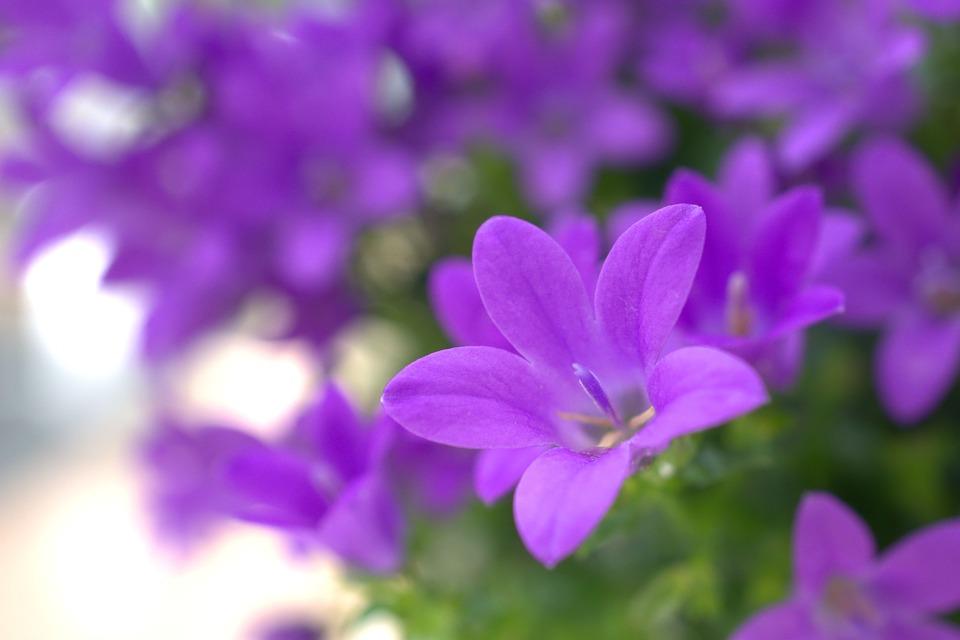 Spring, Flower, Garden, Nature, Plant, Summer, Petal