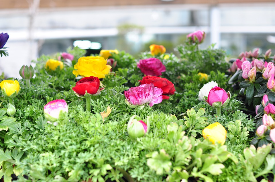 Spring, Flowers, Nature, Plants, Garden, Petal