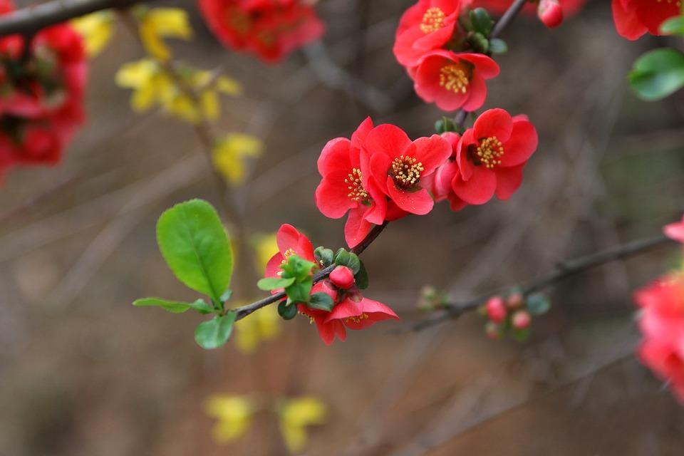 Nature, Flowers, Wood, Quarter, Plants, Petal