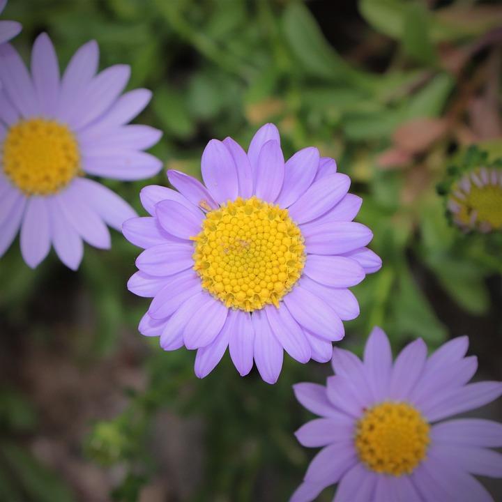 Flowers, Petal, Petals, Plants, Nature