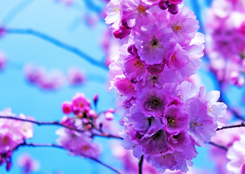Flower, Plant, Nature, Garden, Petal, Season, Flowers