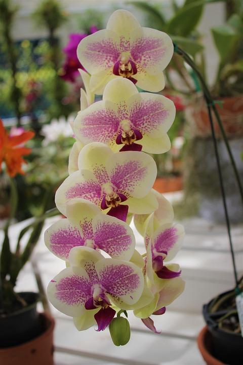Flower, Plant, Tropical, Nature, Petal