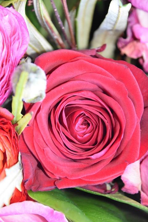 Flower, Rosebush, Floral, Bouquet Of Flowers, Petal