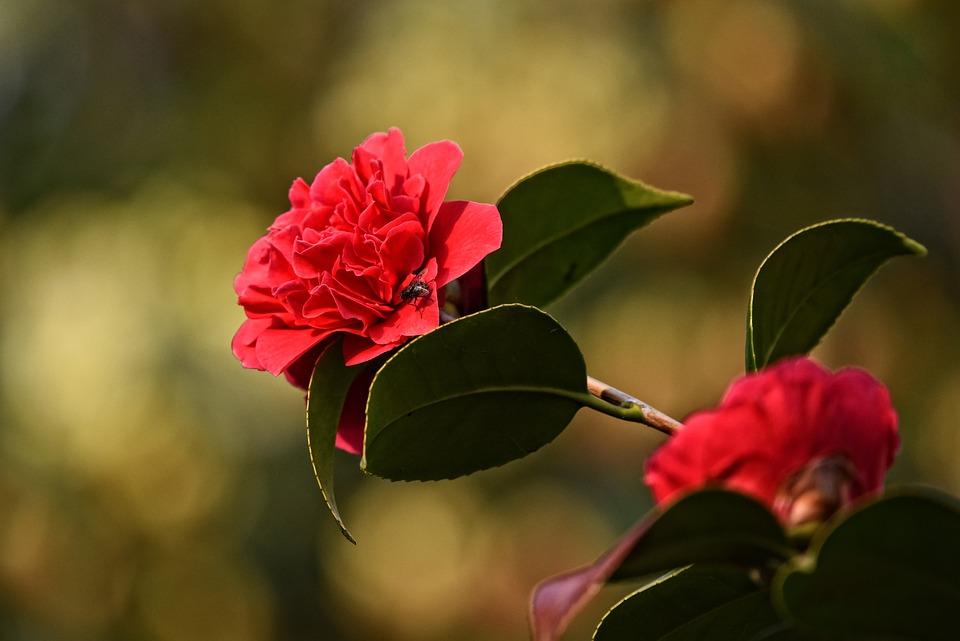 Rhododendron, Flower, Shrub, Bloom, Spring Time, Petal